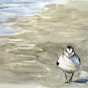 Sanderling in Aquarell
