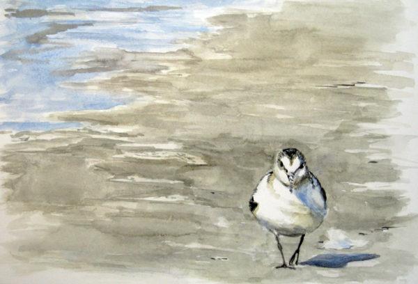 Sanderling in Aquarell